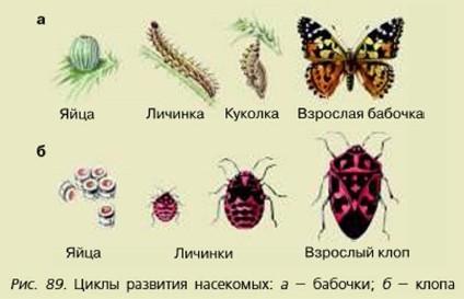 """""""изобретения"""" живой природы для продолжения жизни на земле."""